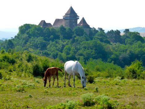 Eine Stute und ein Fohlen äsen vor der Kirchenburg von Weißenkirch