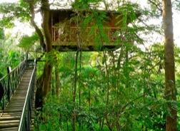 Hoch über dem Boden thront im satten Grün ein kleines Baumhaus.
