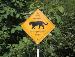 Straßenschild - Vorsicht Tiger kreuzen