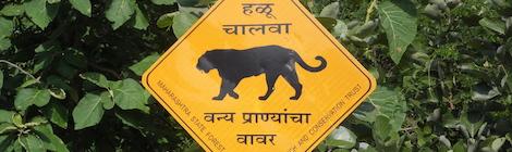 Warnschild: Tiger queren die Straße