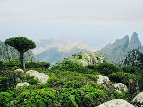 Eine rauhe Gebirgslandschaft mit karger grüner Vegetation auf der zum Jemen gehörenden Insel Sokotra