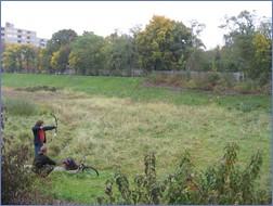 Ein gern gesehener und genutzer Luxus in der Stadt: weite offene Grünflächen, wie hier am Rückhaltebecken der Panke in Berlin
